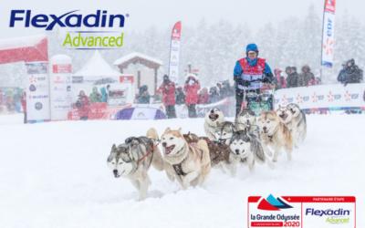 La Grande Odyssée Savoie Mont Blanc lutte contre l'arthrose en partenariat avec Flexadin Advanced